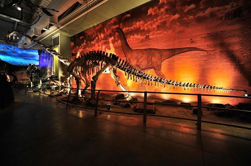 dinozor-muzesi-forum